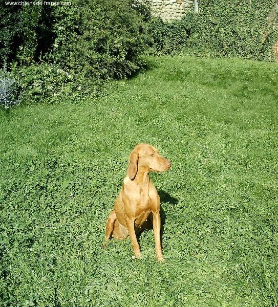 Elevage de la plaine des folies eleveur de chiens braque - A poil dans son jardin ...